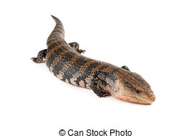 Blue-Tongue Skink clipart #13, Download drawings