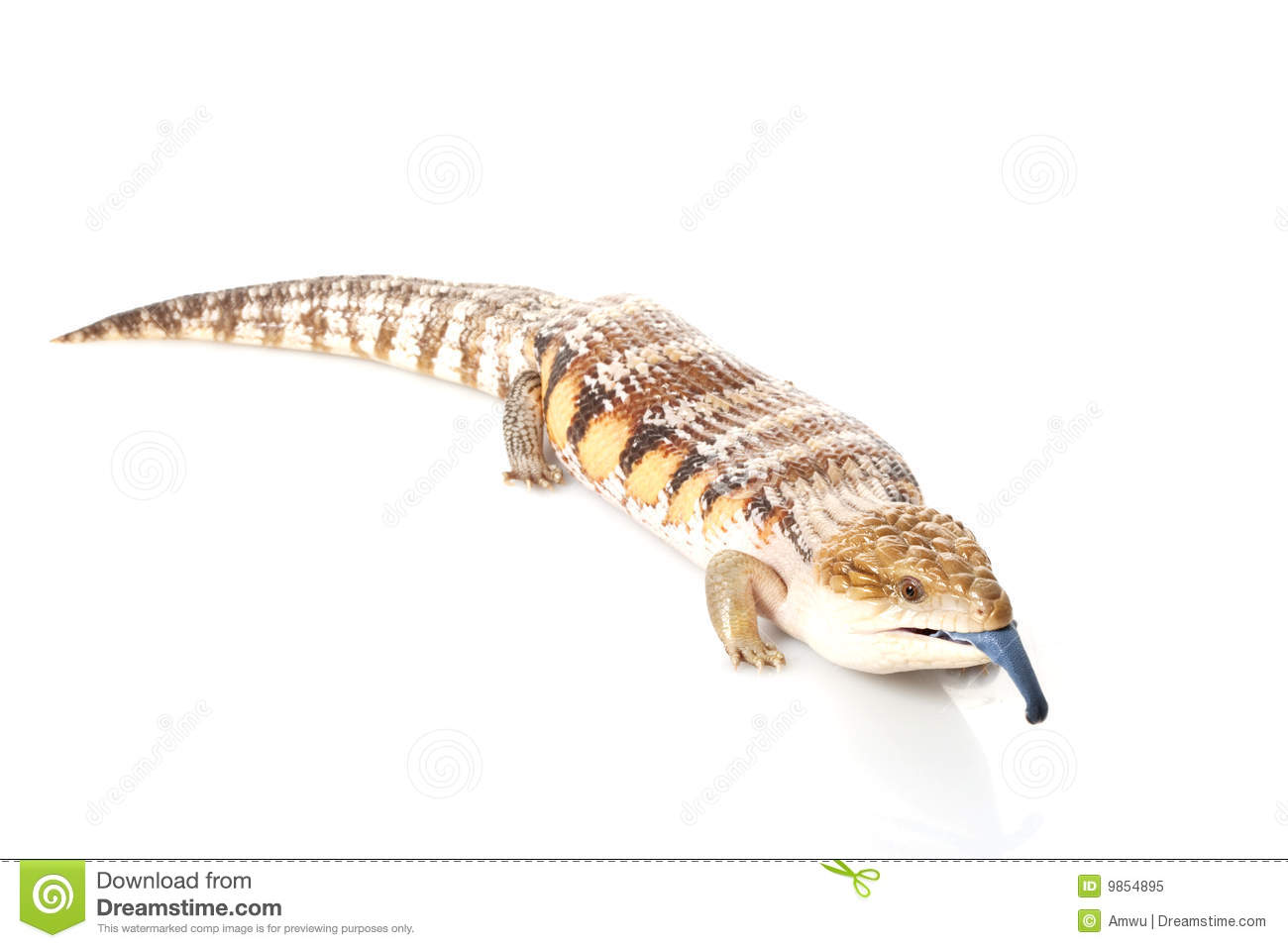 Blue-Tongue Skink clipart #18, Download drawings