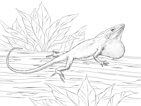 Collared Lizard coloring #1, Download drawings
