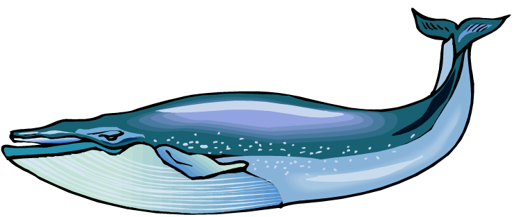 Humpback Whale clipart #20, Download drawings