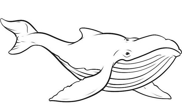 Blue Whale coloring #9, Download drawings