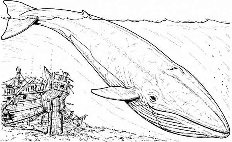 Blue Whale coloring #14, Download drawings