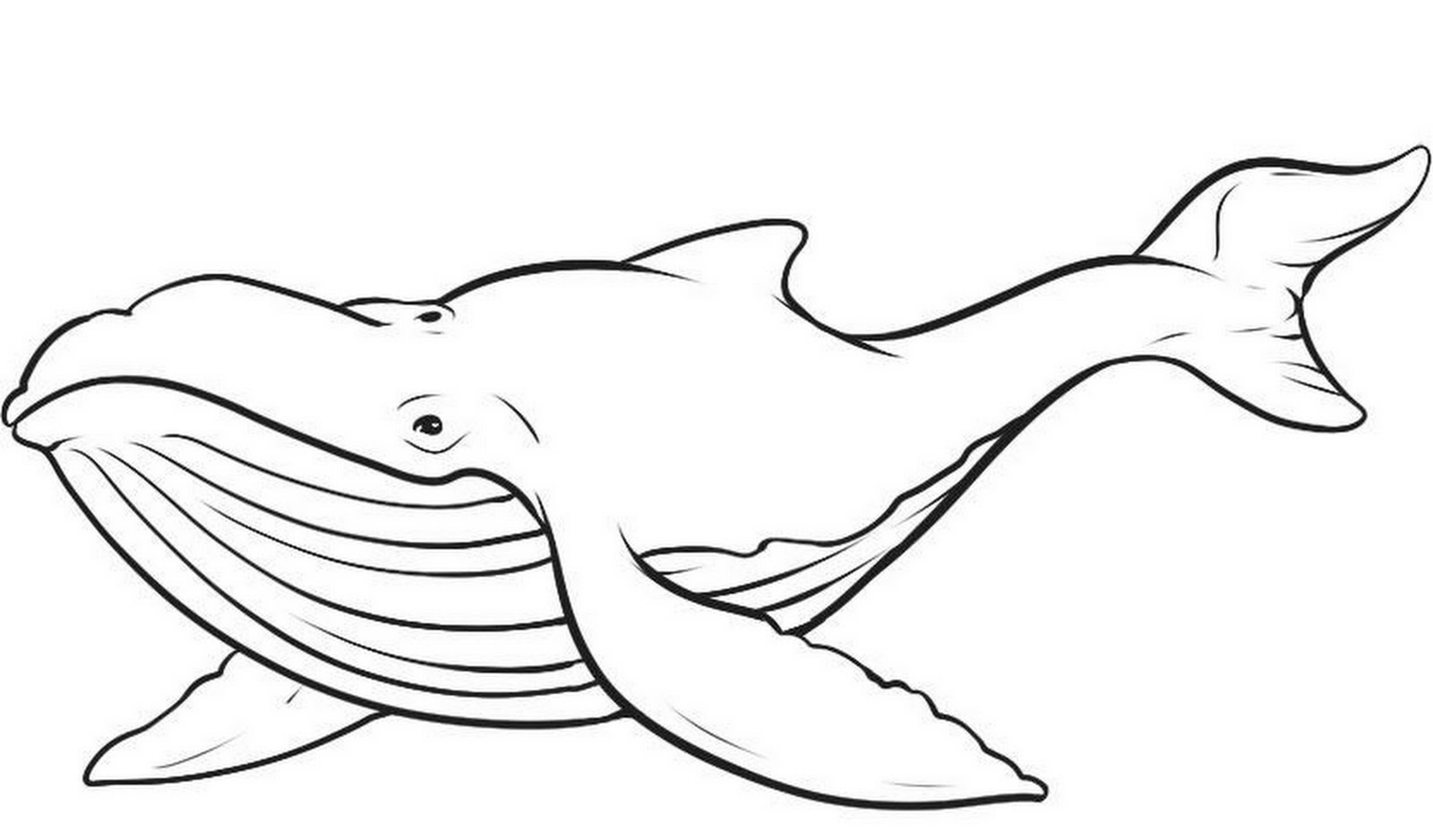 Blue Whale coloring #3, Download drawings