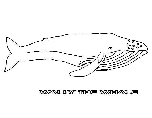 Blue Whale coloring #18, Download drawings