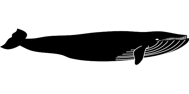 Blue Whale svg #14, Download drawings