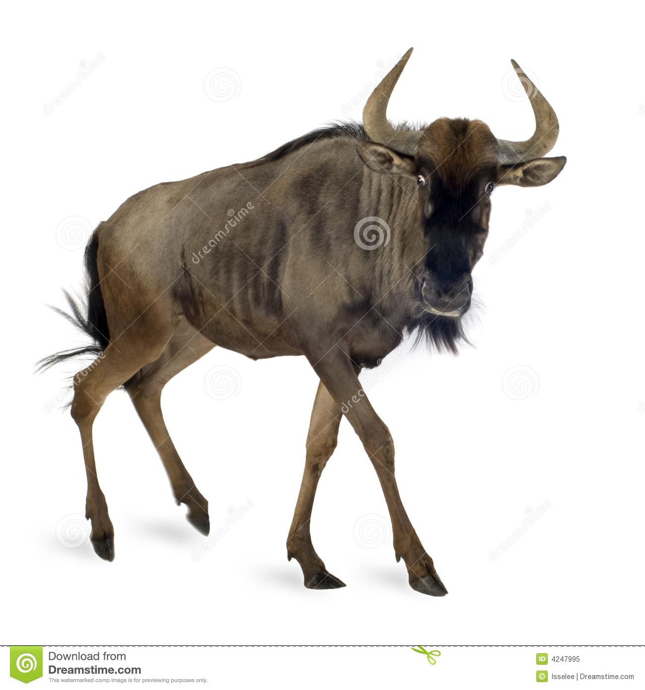 Blue Wildebeest clipart #11, Download drawings