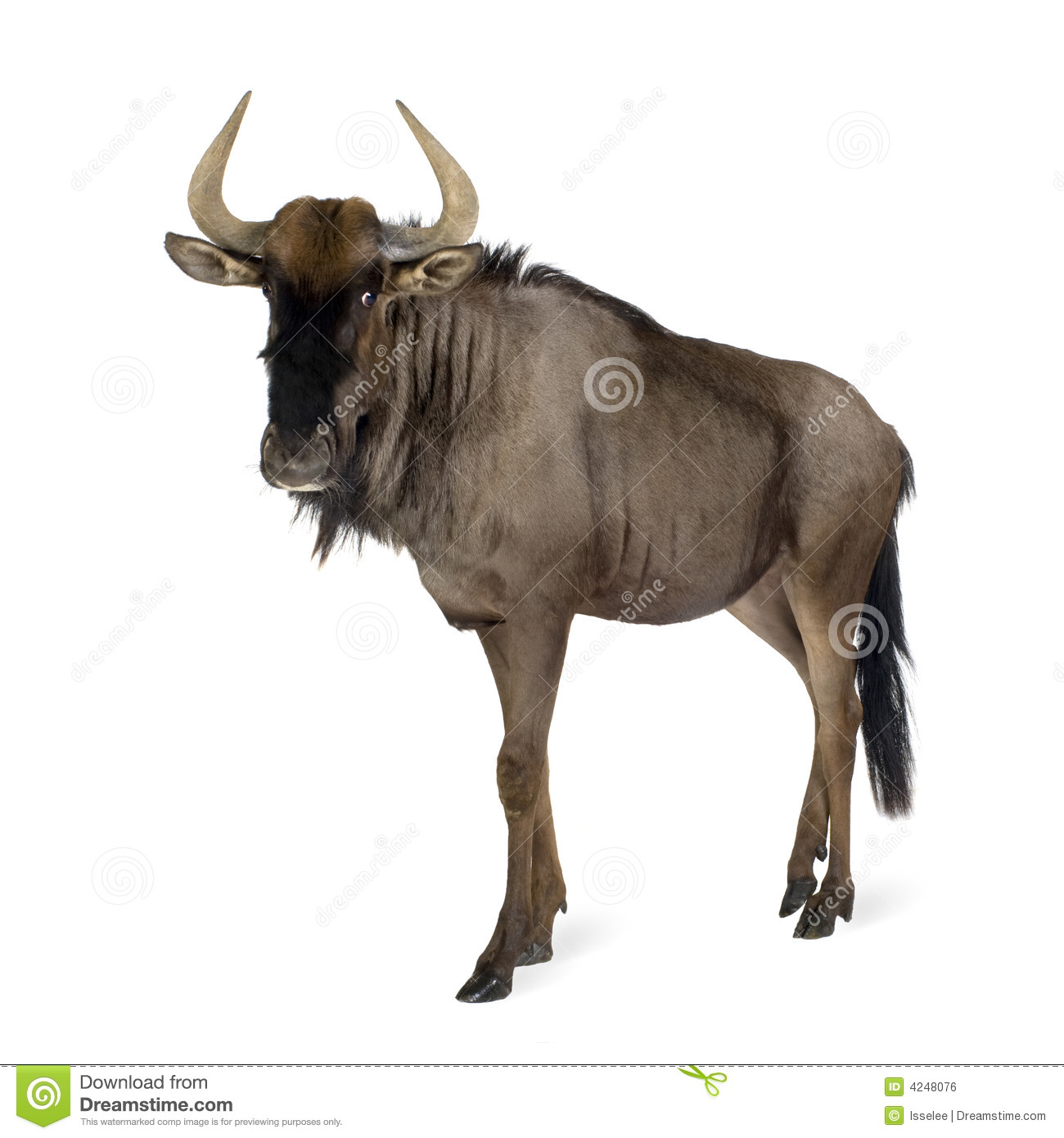 Blue Wildebeest clipart #14, Download drawings