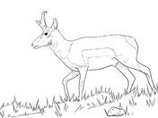 Blue Wildebeest coloring #12, Download drawings