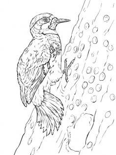 Blue Wildebeest coloring #9, Download drawings