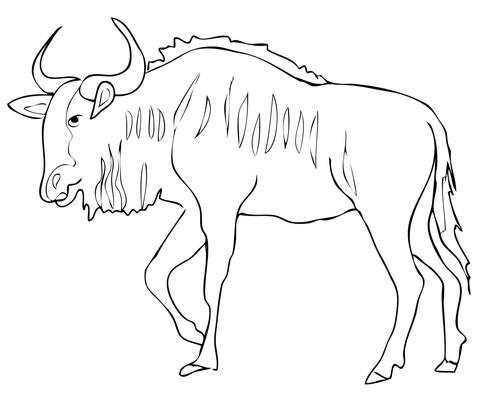 Wildebeest coloring #13, Download drawings