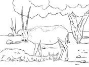 Blue Wildebeest coloring #10, Download drawings