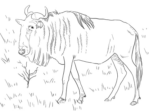 Wildebeest coloring #17, Download drawings