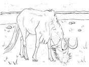 Blue Wildebeest coloring #18, Download drawings