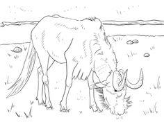 Blue Wildebeest coloring #19, Download drawings