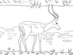 Blue Wildebeest coloring #17, Download drawings
