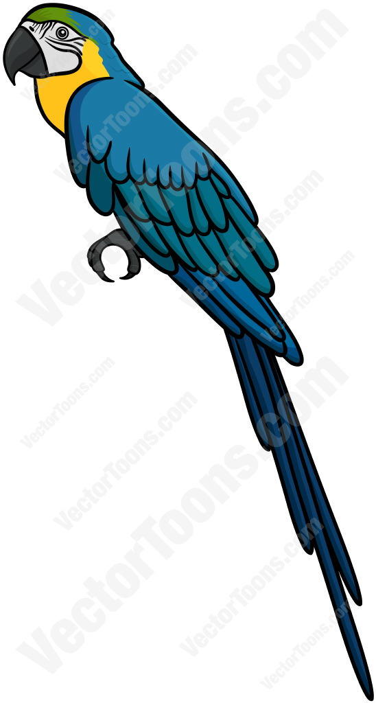 Blue-and-yellow Macaw clipart #20, Download drawings