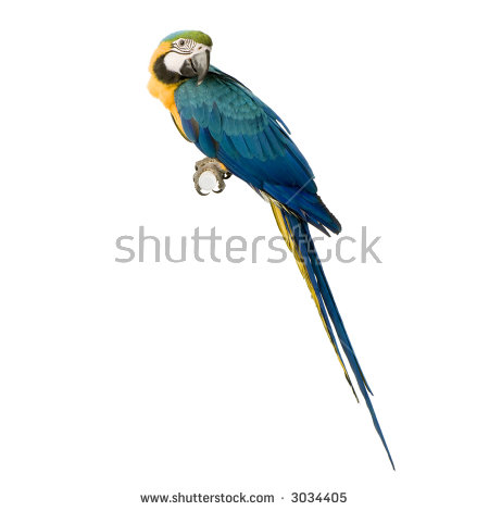 Blue-and-yellow Macaw clipart #14, Download drawings