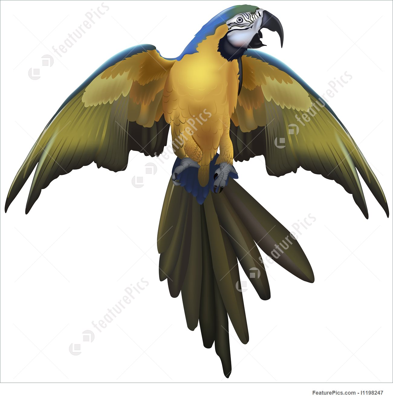 Blue-and-yellow Macaw clipart #1, Download drawings