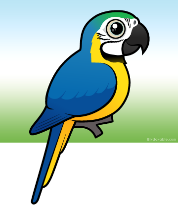 Blue-and-yellow Macaw clipart #19, Download drawings