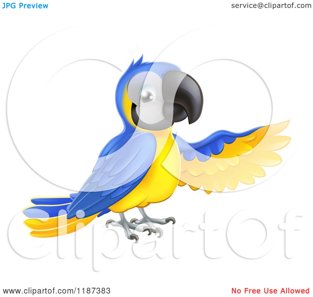 Blue-and-yellow Macaw clipart #7, Download drawings