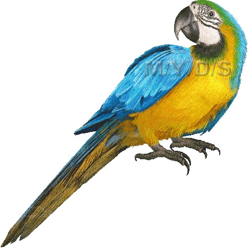 Blue-and-yellow Macaw clipart #10, Download drawings