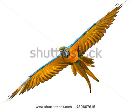 Blue-and-yellow Macaw clipart #18, Download drawings