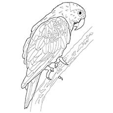 Hyacinth Macaw coloring #15, Download drawings