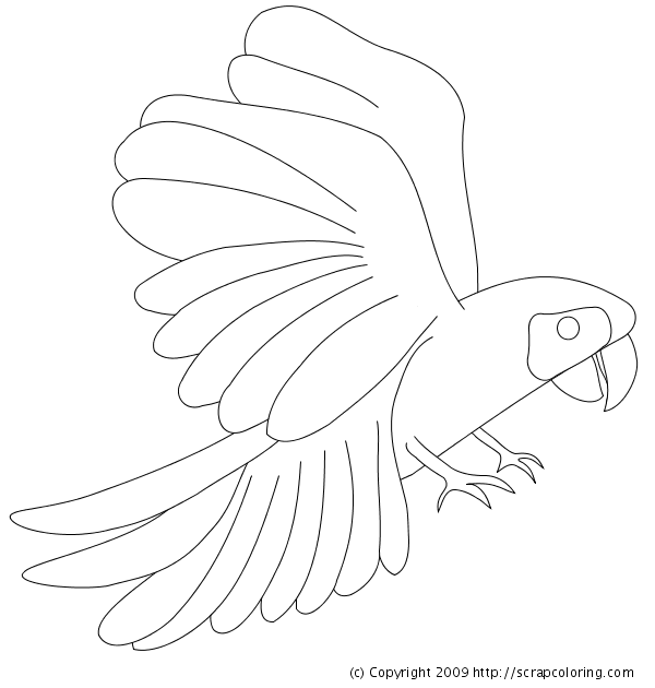 Scarlet Macaw coloring #12, Download drawings