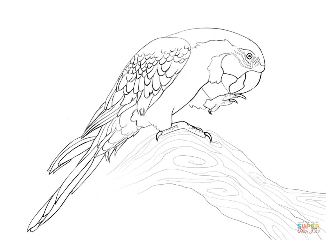 Scarlet Macaw coloring #8, Download drawings