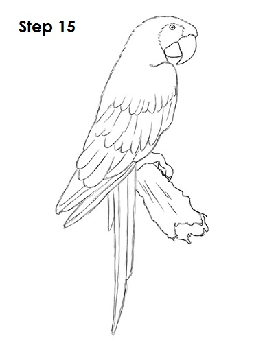 Scarlet Macaw coloring #7, Download drawings