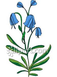 Bluebell clipart #8, Download drawings