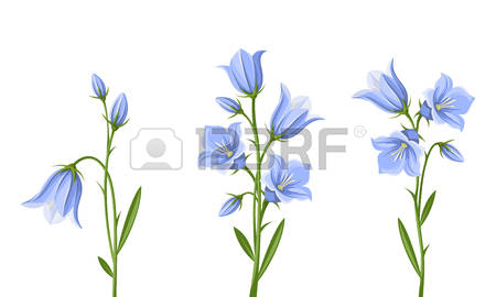 Bluebell clipart #17, Download drawings