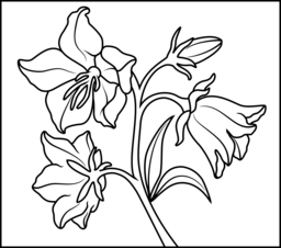 Bluebell coloring #6, Download drawings