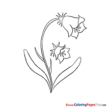 Bluebell coloring #3, Download drawings
