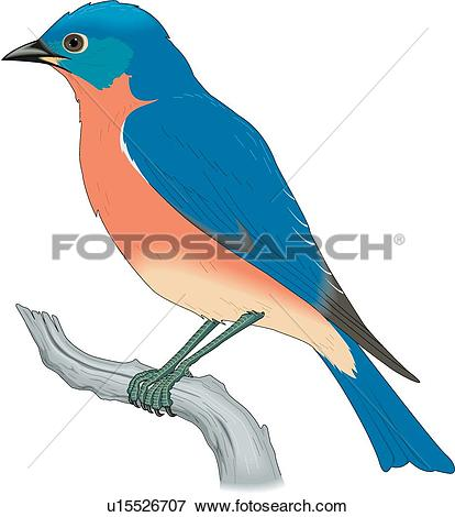 Bluebird clipart #14, Download drawings