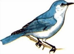 Bluebird clipart #11, Download drawings
