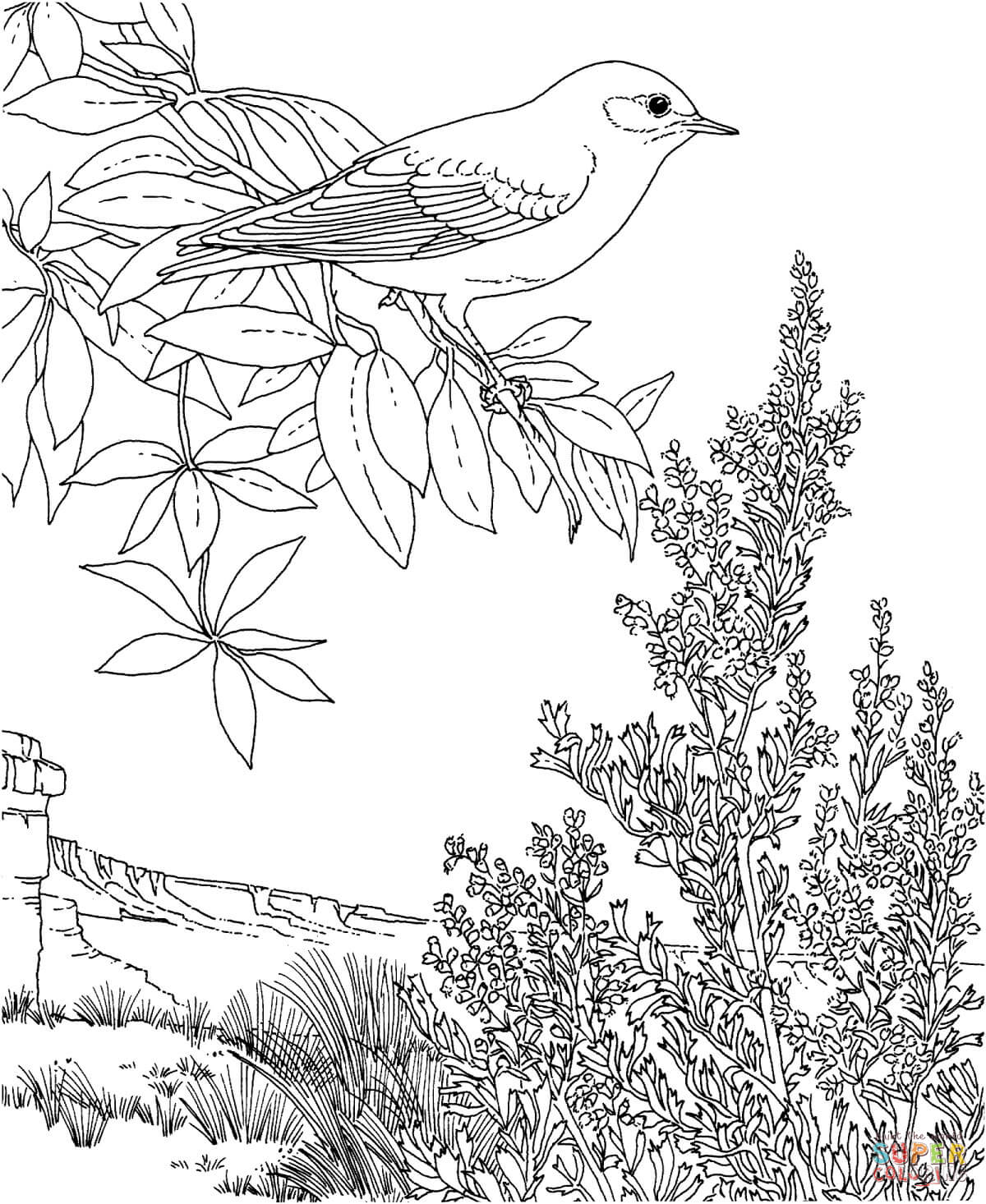 Eastern Bluebird coloring #1, Download drawings