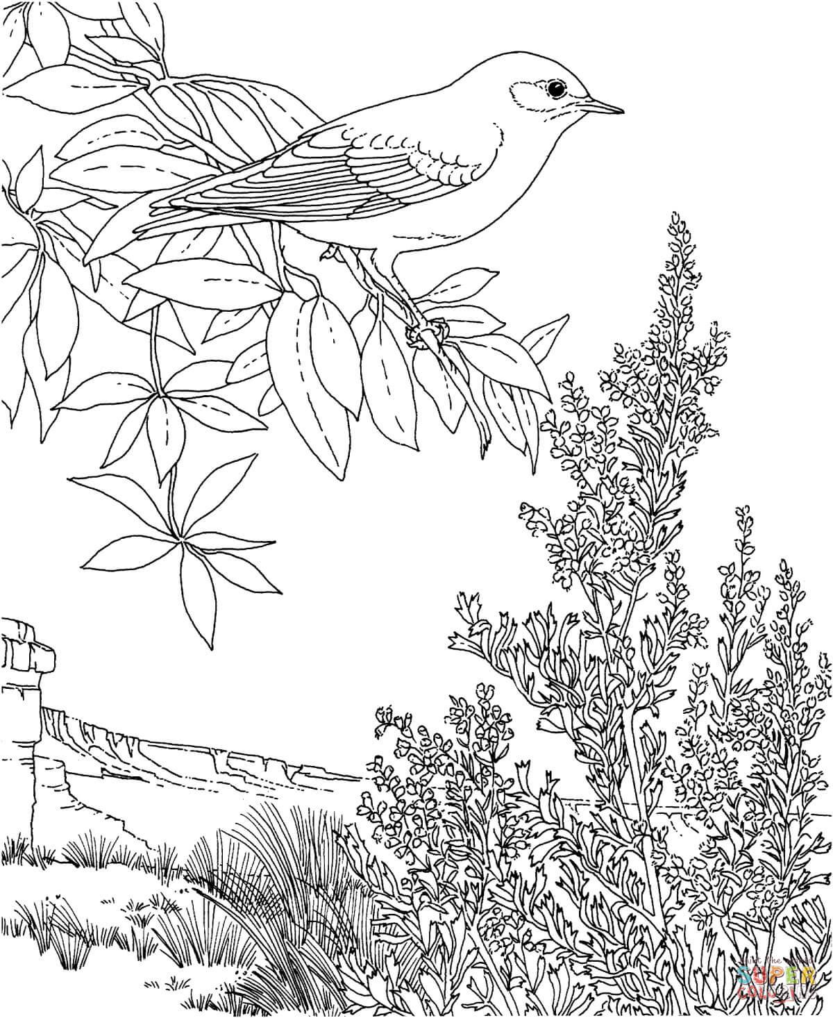 Eastern Bluebird coloring #1, Download drawings
