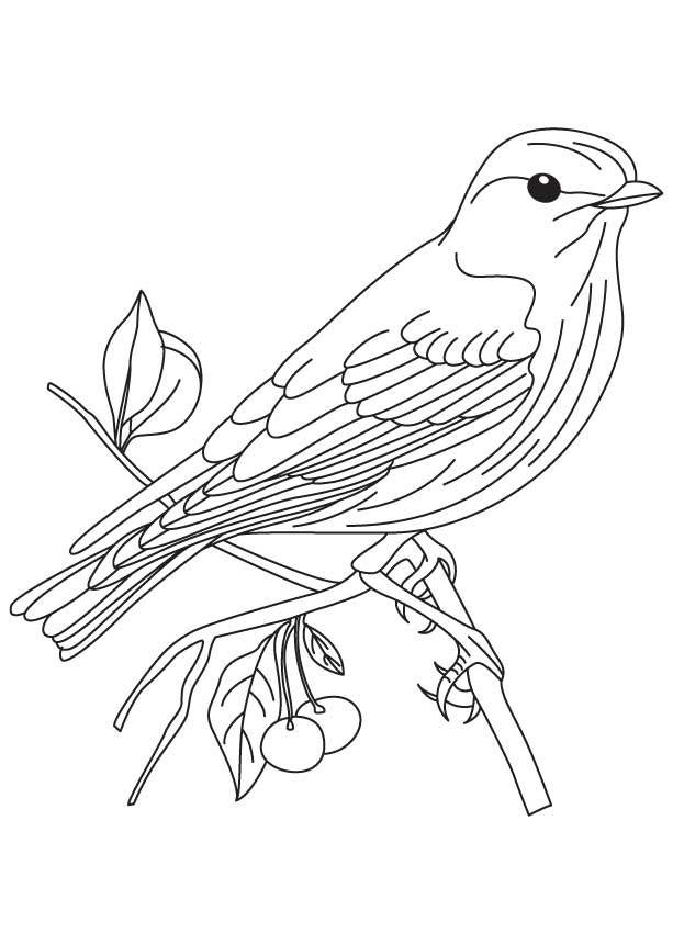 Eastern Bluebird coloring #17, Download drawings