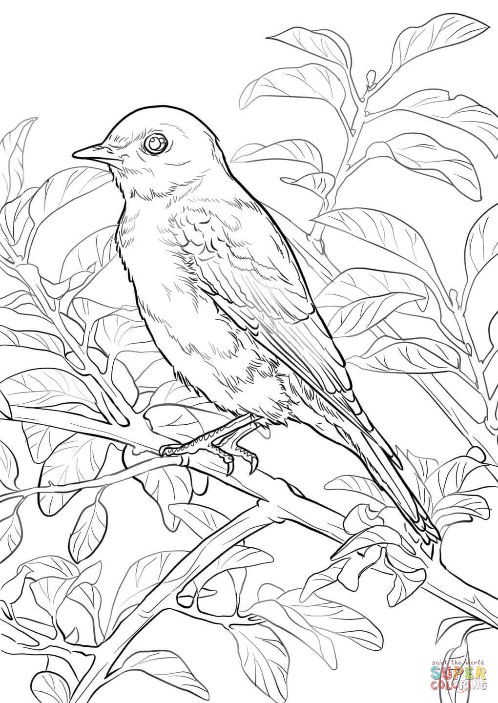 Eastern Bluebird coloring #5, Download drawings