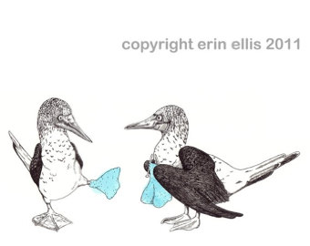 Blue-footed Booby clipart #14, Download drawings