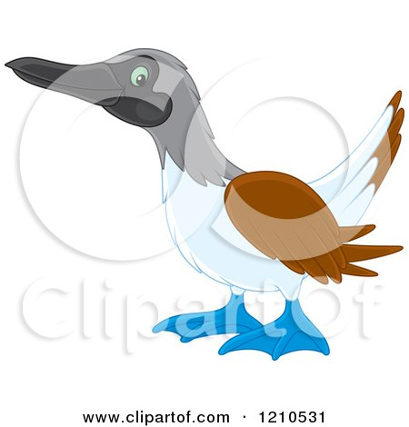 Blue-footed Booby clipart #11, Download drawings