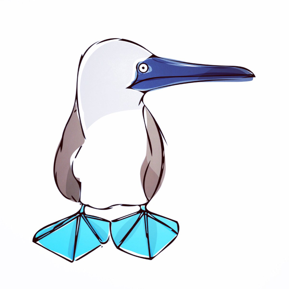 Blue-footed Booby clipart #9, Download drawings