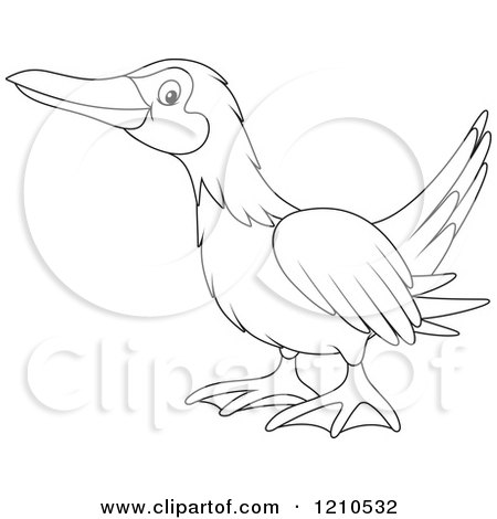 Blue-footed Booby coloring #17, Download drawings