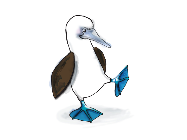 Blue-footed Booby clipart #5, Download drawings