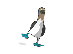 Blue-footed Booby clipart #13, Download drawings