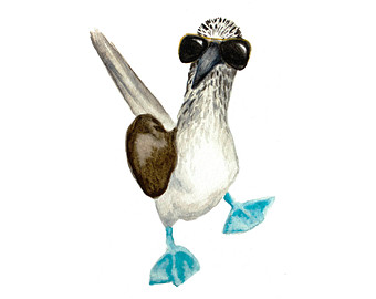 Blue-footed Booby clipart #15, Download drawings