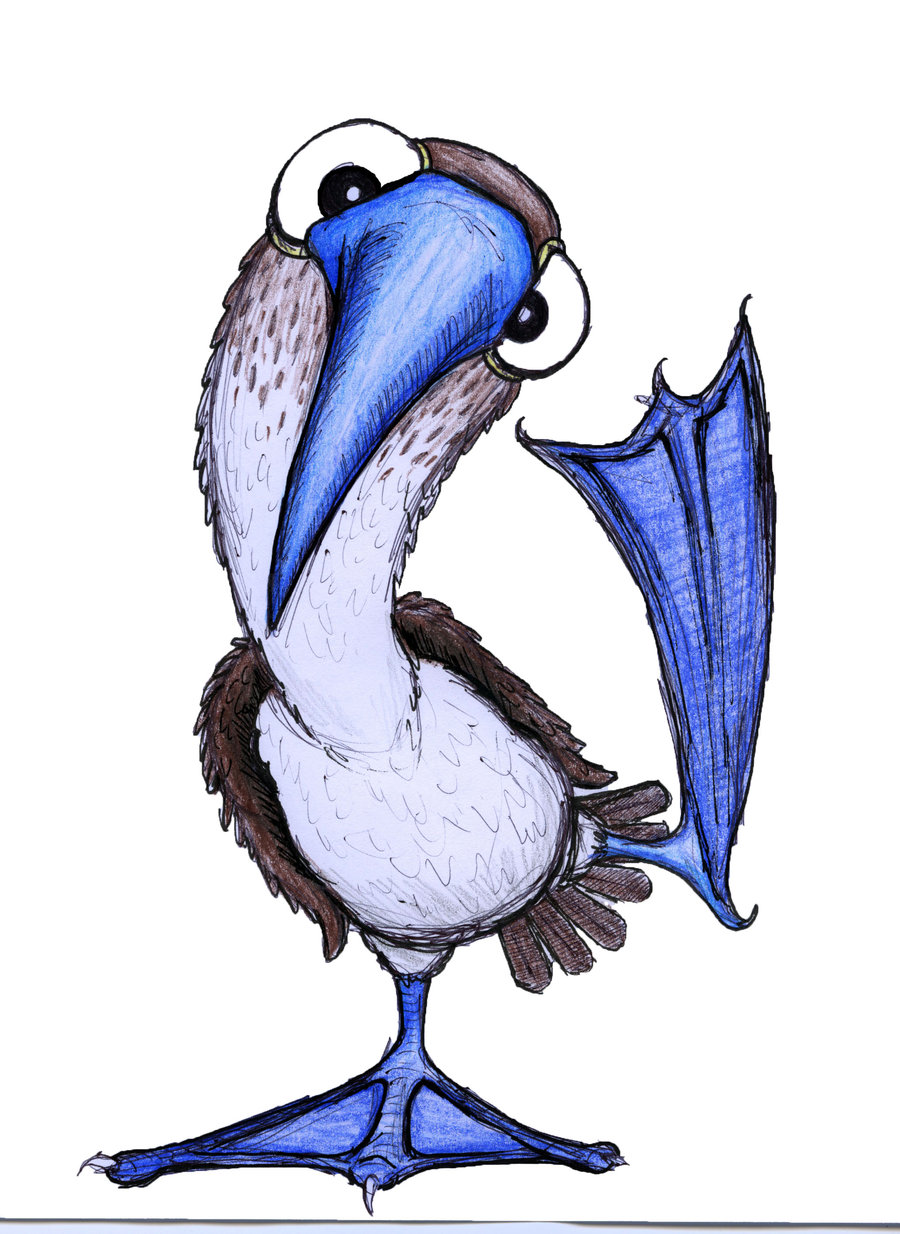 Blue-footed Booby clipart #10, Download drawings