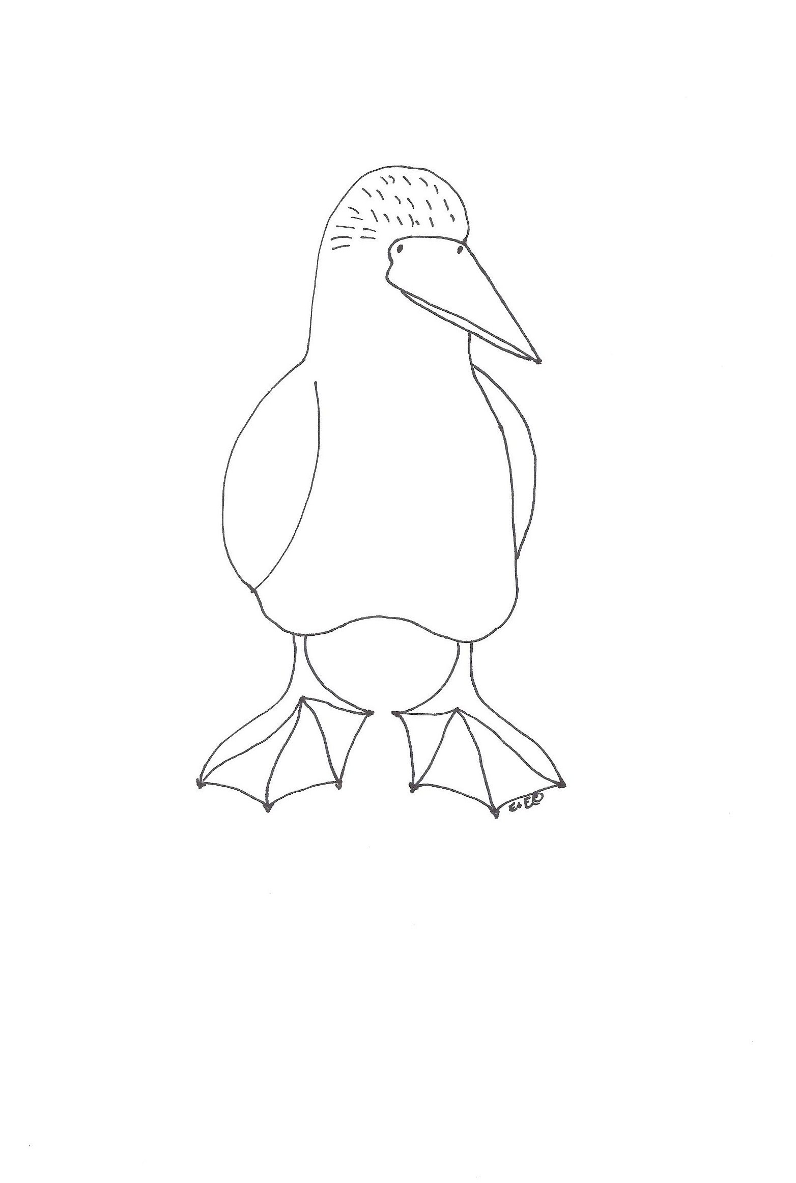 Blue-footed Booby coloring #10, Download drawings