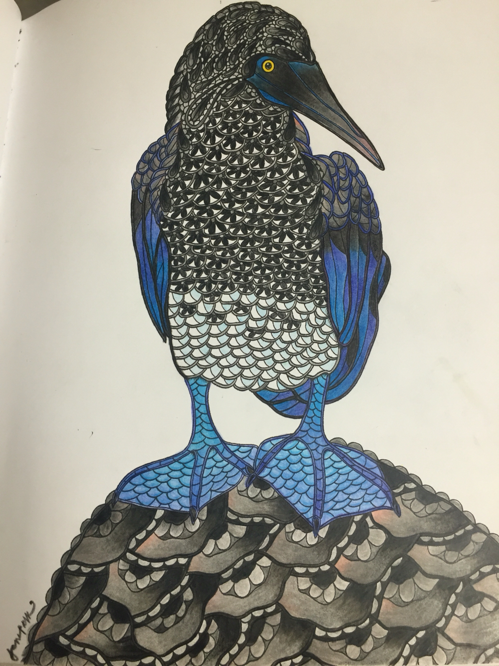 Blue-footed Booby coloring #5, Download drawings